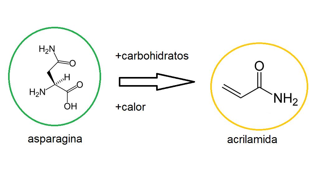 Largas fermentaciones: posible alternativa para disminuir la acrilamida