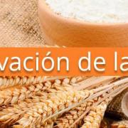 ¿Cómo se conserva mejor la harina?