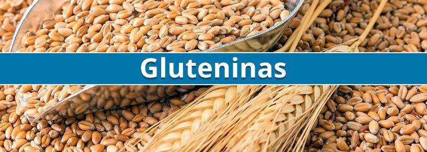 Nuevas variantes de gluteninas pueden tener un papel determinante en la calidad del trigo